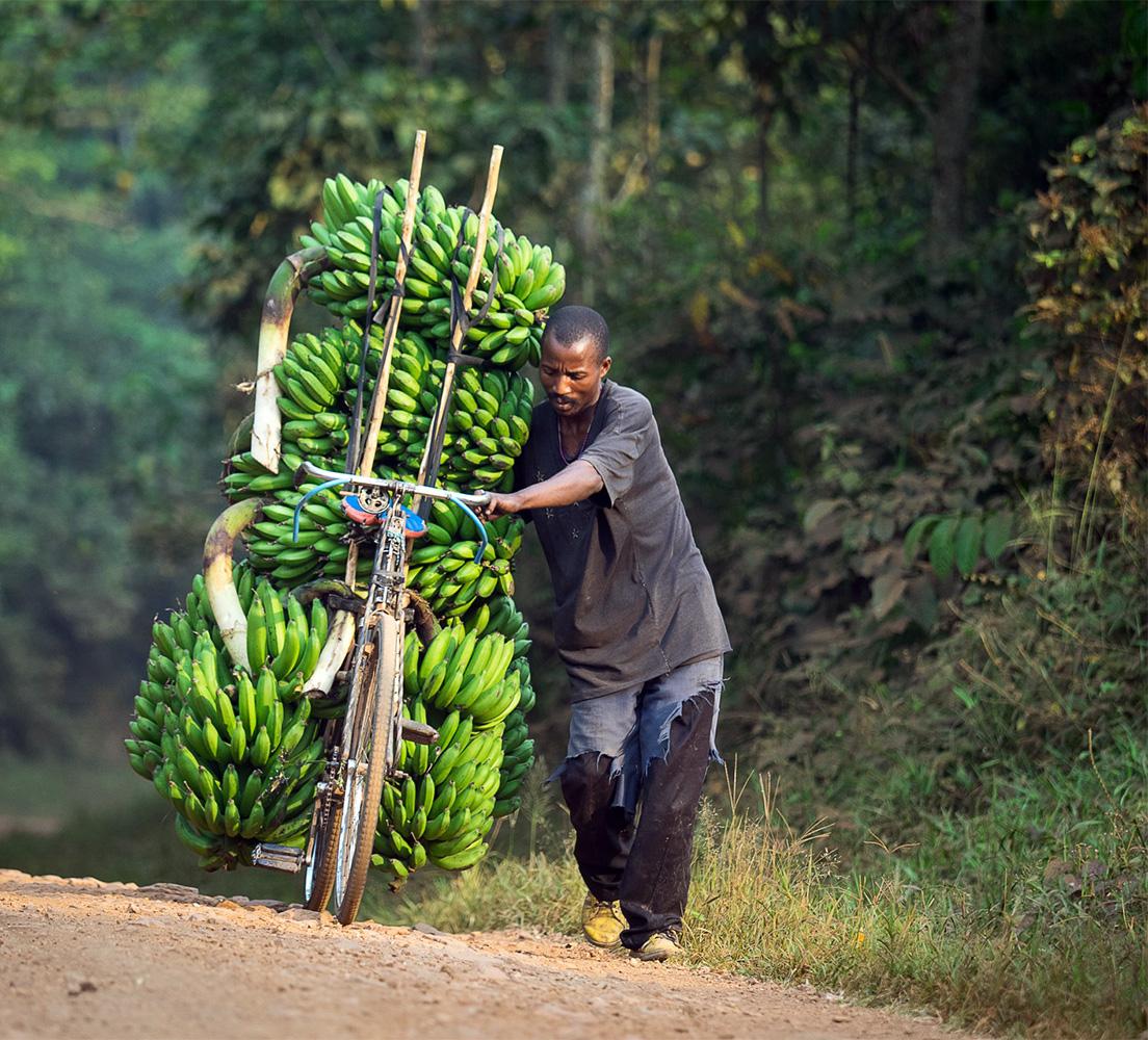 Bananentransport