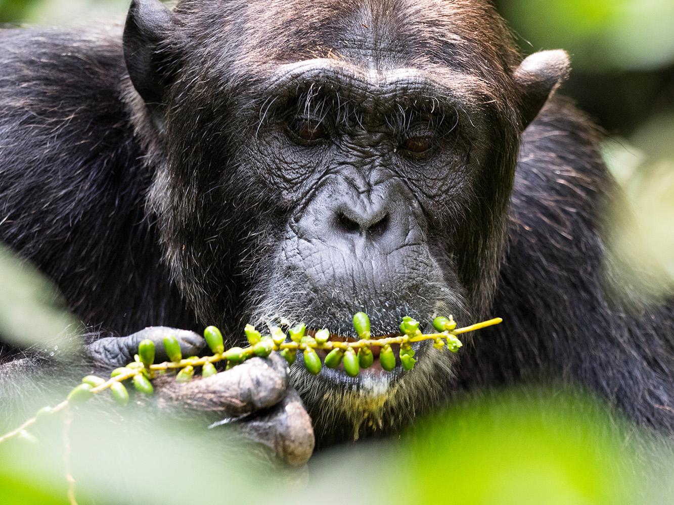 Fotoreise UGANDA 2016